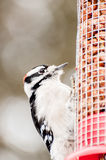 Pássaro que está em um alimentador fotografia de stock