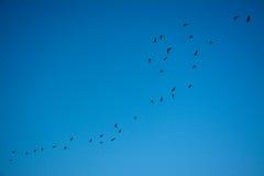 Pássaro que gira ao redor no céu azul Fotos de Stock Royalty Free