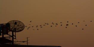 Pássaro que gira ao redor no crepúsculo Imagem de Stock Royalty Free
