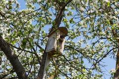 Pássaro que obtem na caixa de assentamento Fotos de Stock
