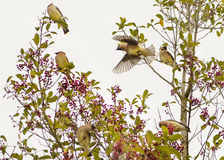 Pássaro que olha o fora Fotografia de Stock