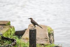 Pássaro que quer saber para voar altamente ou baixo Fotografia de Stock Royalty Free