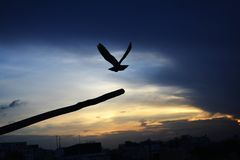 Pássaro que sae afastado da plataforma fotos de stock