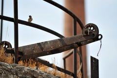Pássaro que senta-se no fio. Imagens de Stock Royalty Free