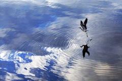 Pássaro que toma o vôo Foto de Stock Royalty Free