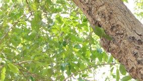 Pássaro que voa dentro aos ninhos na árvore alta na floresta tropical tropical filme