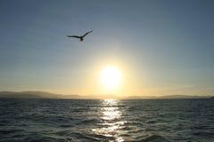 Pássaro que voa sobre o por do sol no céu fotografia de stock