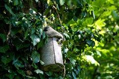 Pássaro só na casa na árvore Fotos de Stock