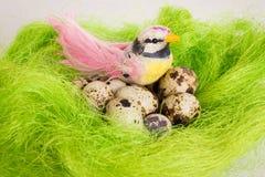 Pássaro salpicado que senta-se em uma cesta do ninho com ovos de codorniz Imagem de Stock