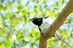 Pássaro sedento Fotografia de Stock