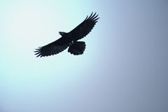 Pássaro selvagem Fotografia de Stock Royalty Free
