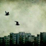Pássaro sobre a cidade Imagens de Stock