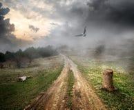 Pássaro sobre a estrada secundária Imagem de Stock Royalty Free