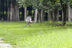 Pássaro sobre a grama foto de stock