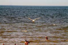 Pássaro sobre praia do mar, Mar do Norte, os Países Baixos foto de stock