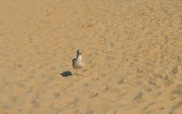 Pássaro solitário Fotos de Stock Royalty Free