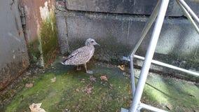 Pássaro sozinho 3 Imagens de Stock