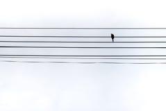 Pássaro sozinho em fios Fotos de Stock