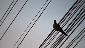 Pássaro sozinho no fio Período do por do sol Fotografia de Stock