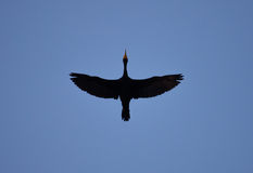 Pássaro subindo Imagens de Stock Royalty Free