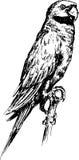 Pássaro tirado mão da arara Imagem de Stock Royalty Free