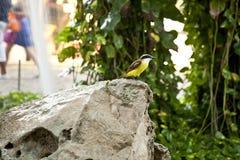 Pássaro tropical fotografia de stock
