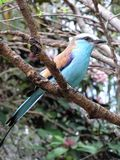 Pássaro tropical foto de stock royalty free