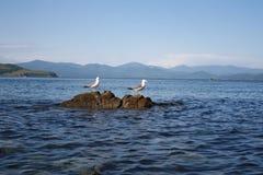 Pássaro uma gaivota Fotografia de Stock Royalty Free