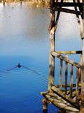 pássaro velho do gloriette e de água Imagem de Stock Royalty Free
