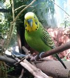 Pássaro verde Fotografia de Stock