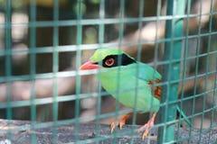 Pássaro verde atrás das barras imagens de stock royalty free