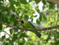 Pássaro verde em um ramo de árvore Imagens de Stock