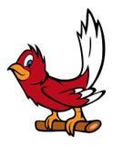 Pássaro vermelho do pisco de peito vermelho Fotografia de Stock Royalty Free