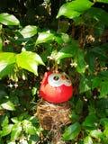 Pássaro vermelho pequeno Imagem de Stock