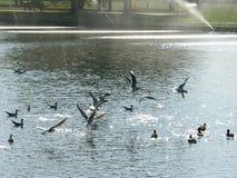 Pássaros fotografia de stock royalty free
