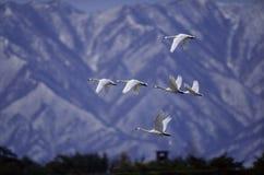 Pássaros Imagens de Stock