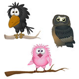 Pássaros Fotos de Stock