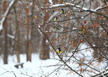pássaros Foto de Stock