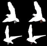 Pássaros Fotografia de Stock