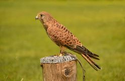 Pássaros 001 Imagem de Stock