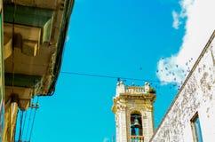 Pássaros acima de uma torre de sino em Rabat, Malta Fotos de Stock Royalty Free