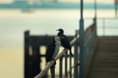 Pássaros adiantados Fotografia de Stock Royalty Free