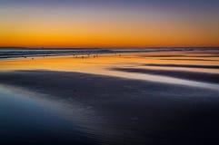 Pássaros adiantados na praia de incandescência na hora dourada da manhã fotografia de stock