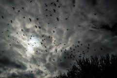 Pássaros afastado Imagem de Stock Royalty Free