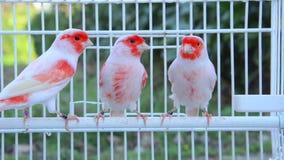 Pássaros amarelos vídeos de arquivo