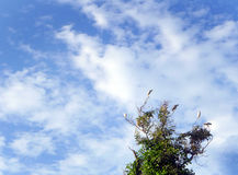 Pássaros amarelos da cacatua sobre a árvore Imagem de Stock
