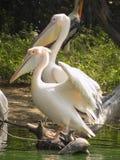 Pássaros bonitos Fotos de Stock