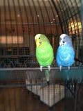 Pássaros bonitos Imagens de Stock