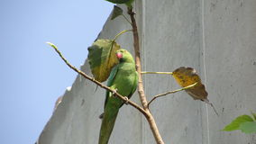 Pássaros bonitos Fotografia de Stock Royalty Free