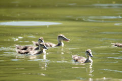 Pássaros bonitos Fotos de Stock Royalty Free